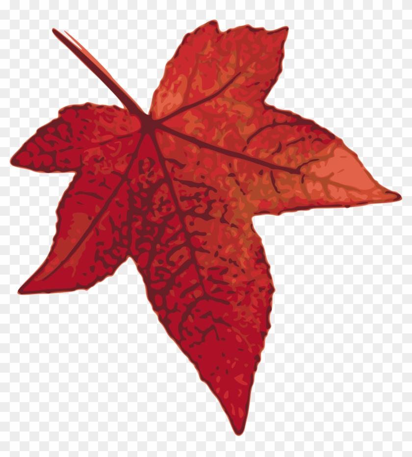 Clipart - Maple Leaf Clip Art #27019