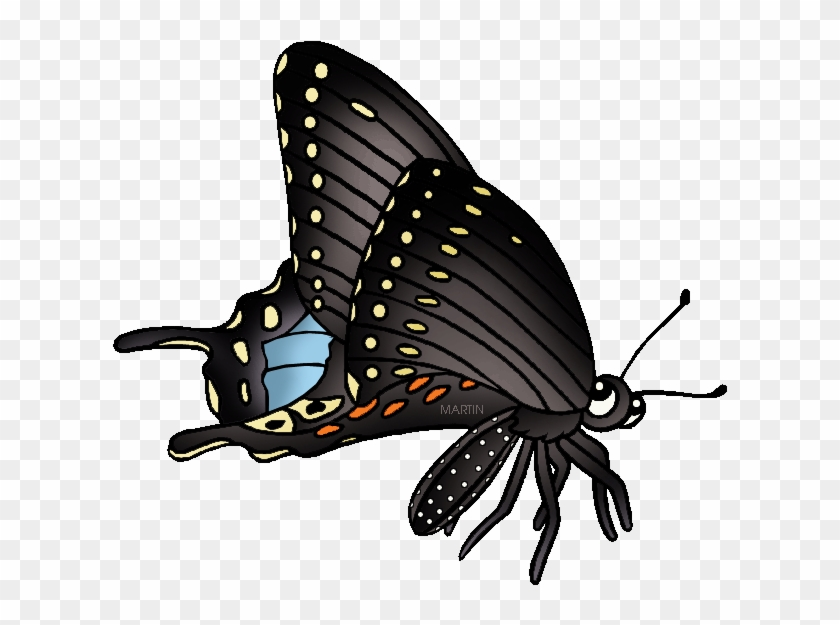 State Butterfly Of Oklahoma - Black Swallowtail Butterfly Clipart #923119