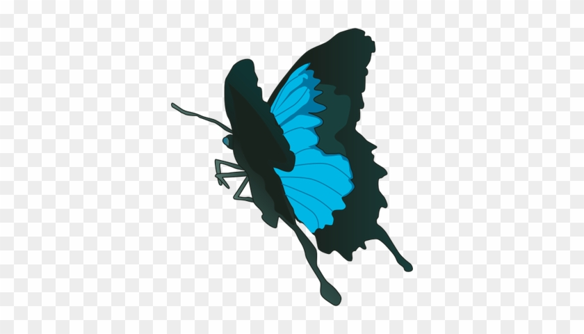 Swallowtail Butterfly Svg - Papilio Ulysses Butterfly #923160