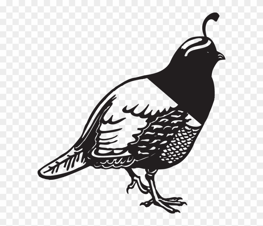 quail clipart black and white free transparent png clipart images
