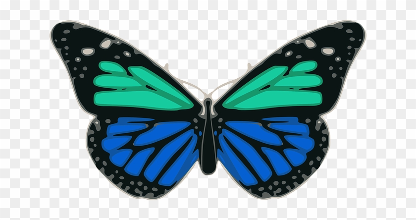 Blue Butterfly Turquoise Colors Wings Insect