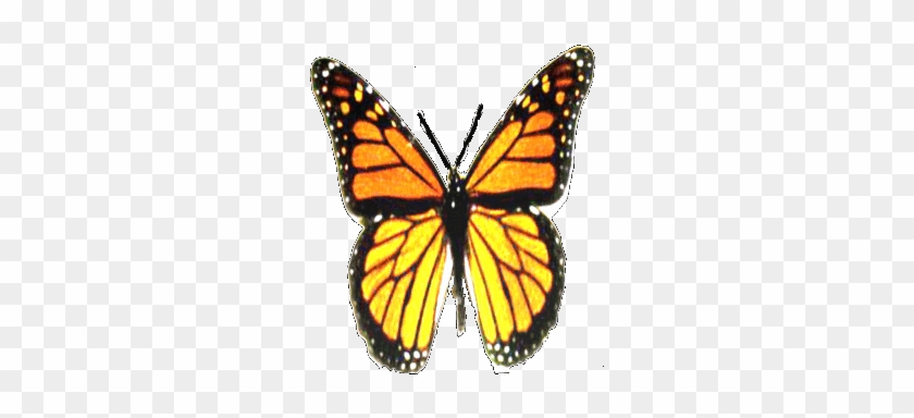 Before Beginning A Butterfly Garden Project, It Helps - Animated Flying Butterfly Gif #925216