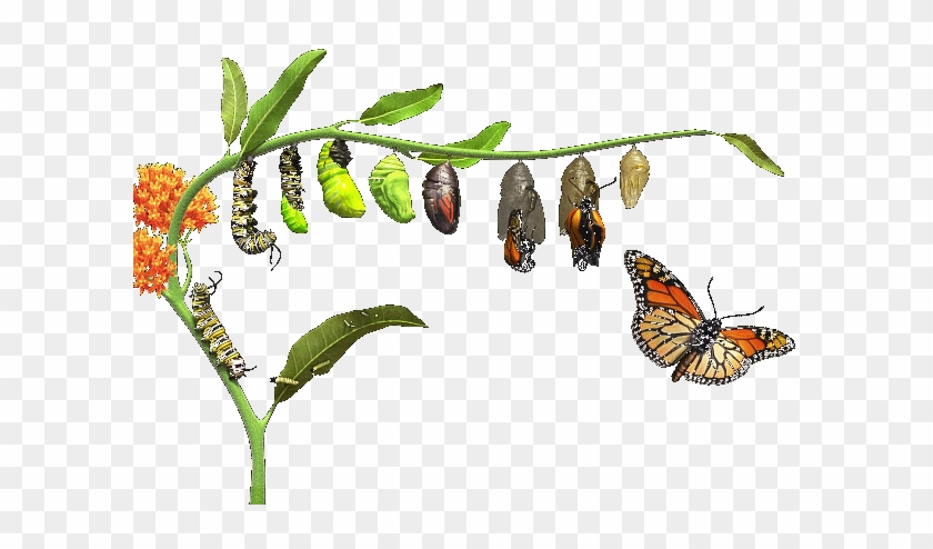 Life & Death - Does A Caterpillar Turn Into A Butterfly #925262