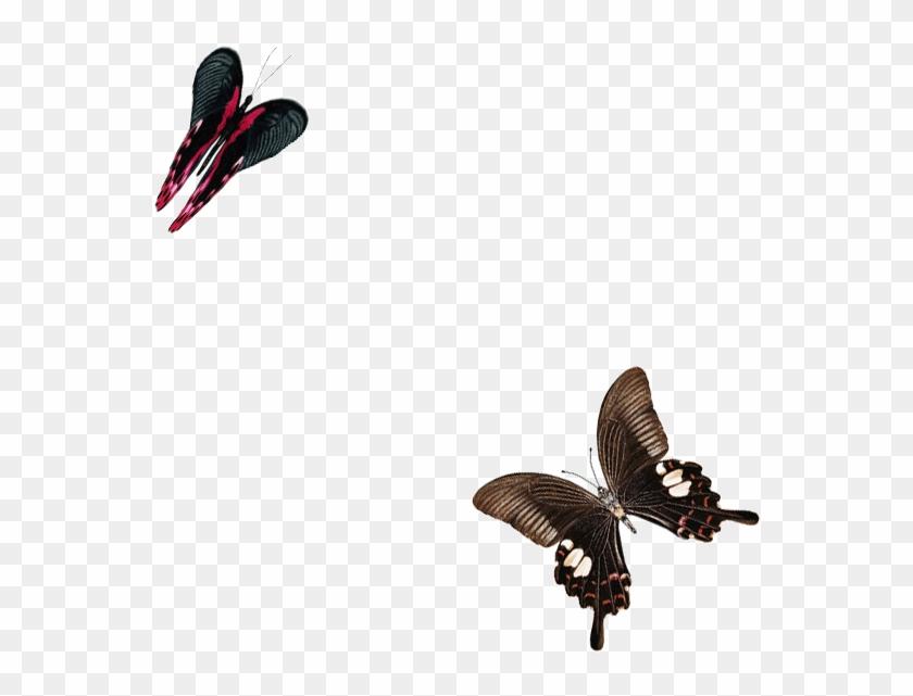 Картинки анимации бабочки летают, открытки