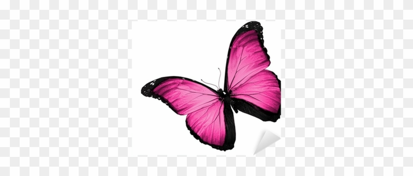 Pink Butterfly Flying Isolated On White Background Butterflies And Moths Free Transparent Png Clipart Images Download