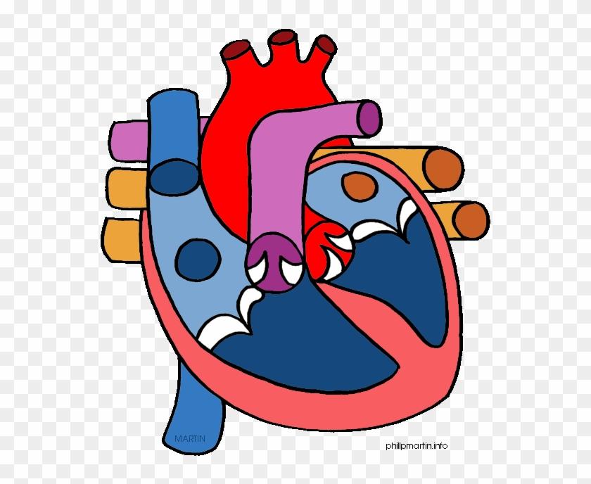 Human Heart Clipart - Heart Diagram No Labels #933257