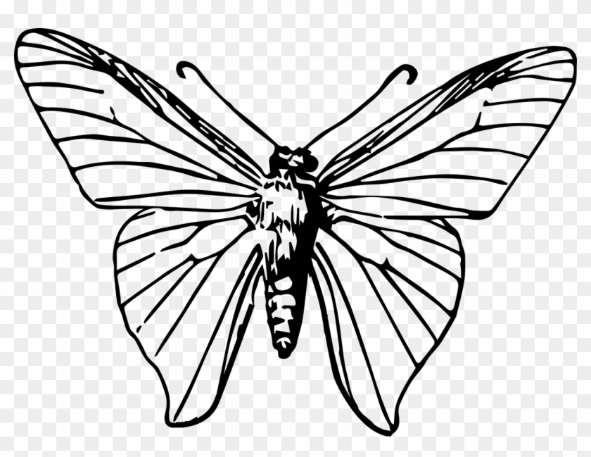 Monarch Butterfly Insect Moth Clip Art Gambar Ilustrasi Kupu Kupu Free Transparent Png Clipart Images Download