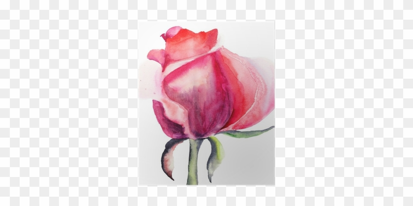 Watercolor Painting Of Flower Rose #936720