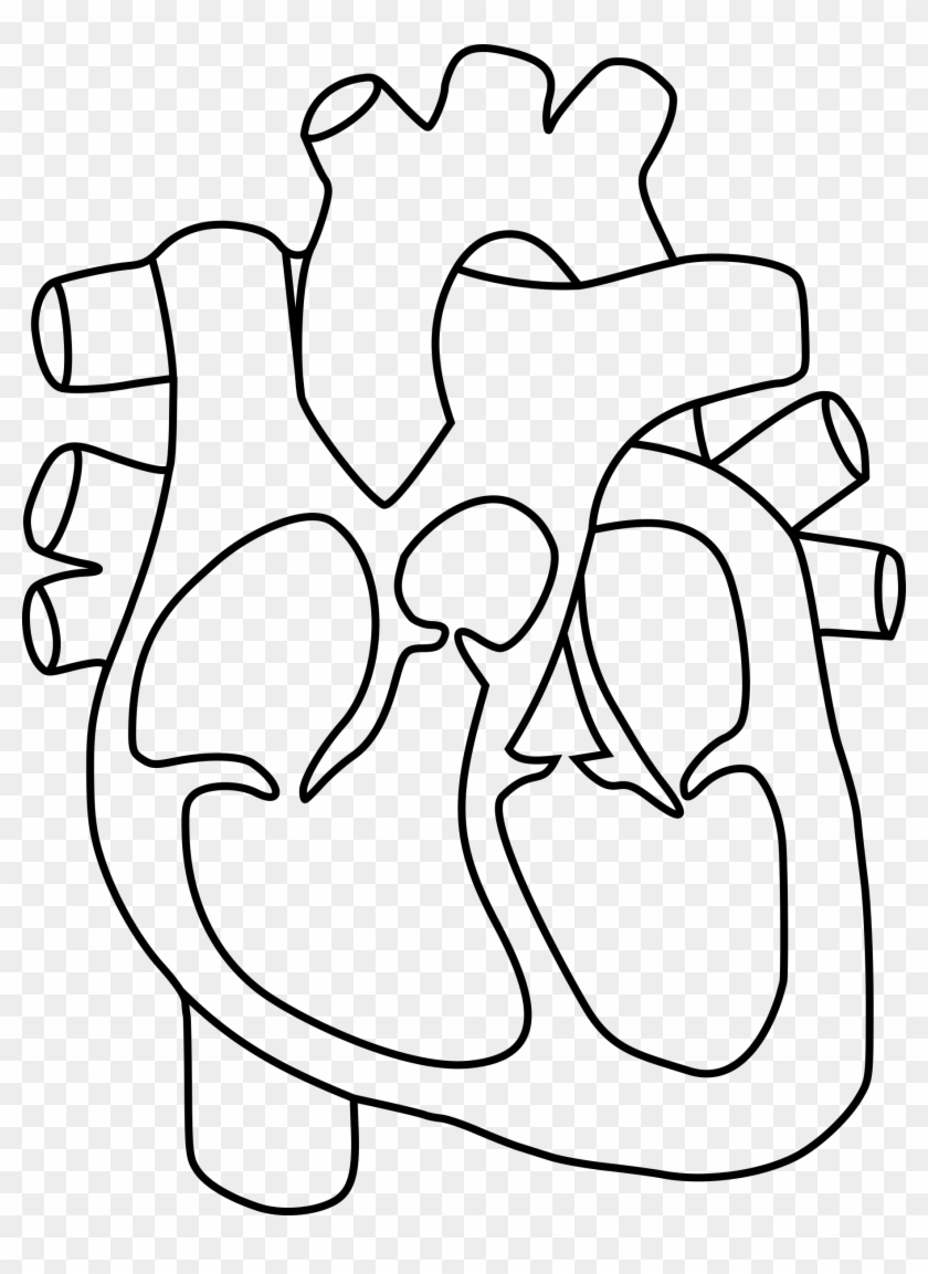 Big Image Diagram Of The Heart Without Labels Free Transparent