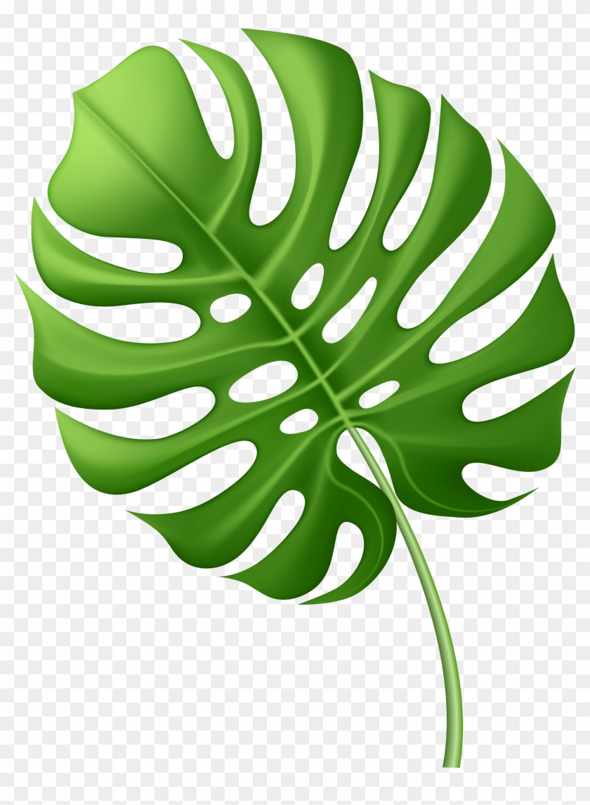 Large Tropical Leaf Png Clip Art Image Vector Graphics Free Transparent Png Clipart Images Download Download 4,096 tropical leaves free vectors. large tropical leaf png clip art image