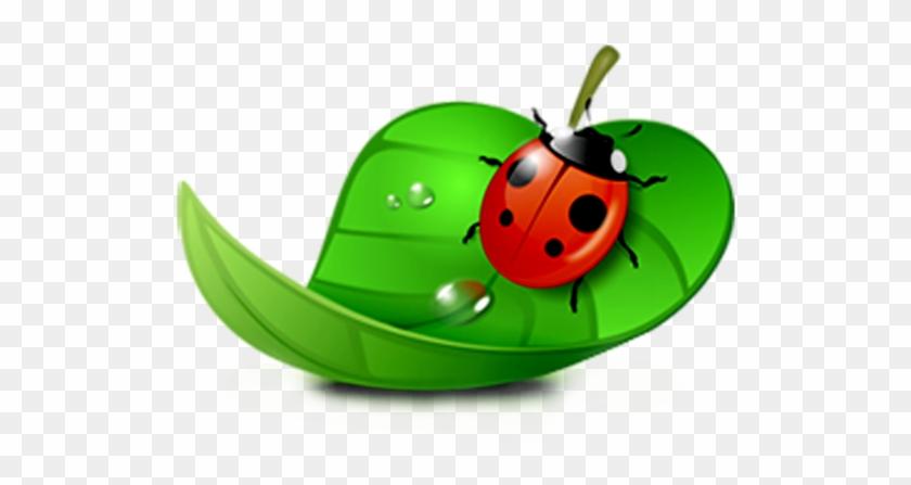 Coreldraw Computer Software Ladybird - Ladybugs In Leaf Clipart #946764
