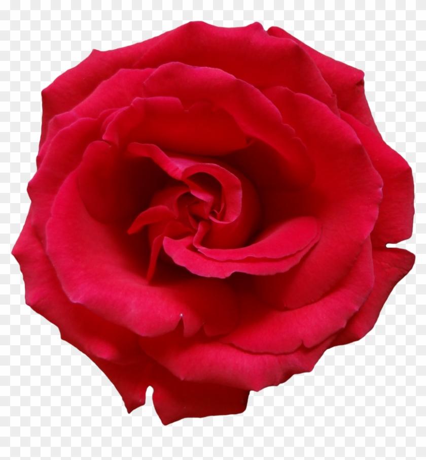 Rose Png Image, Free Picture Download - Dark Pink Rose Png #171083
