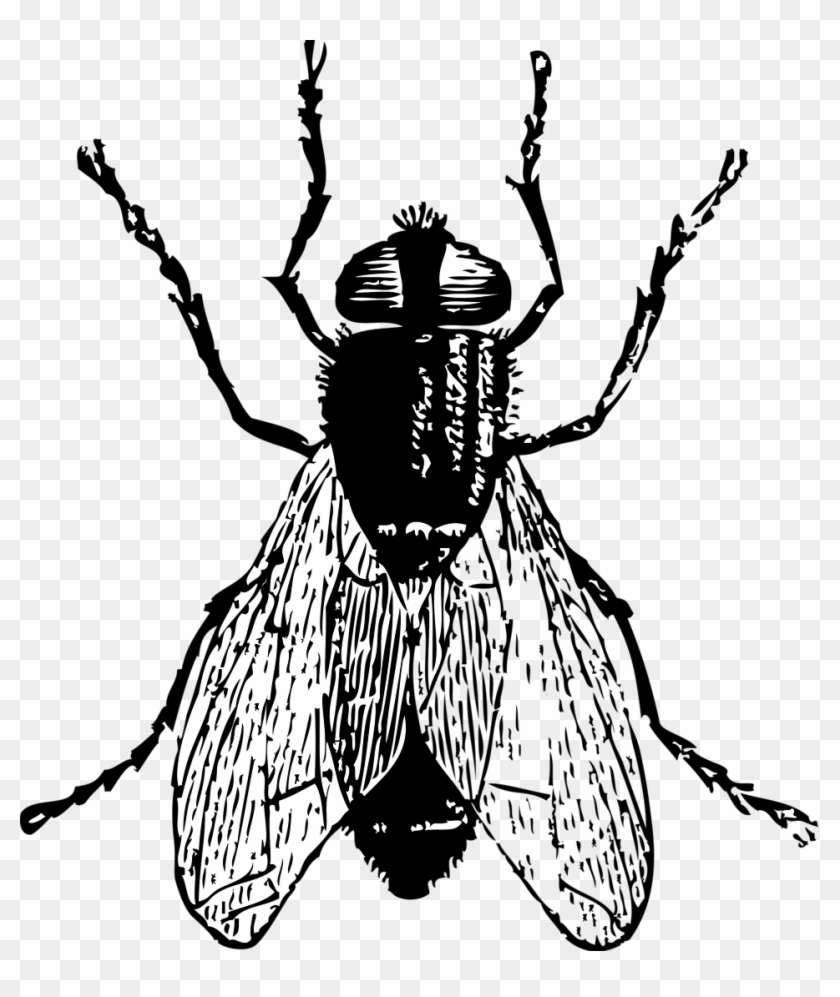 Fly Bug Insect Clip Art Free Vector / 4vector - Fly Black And White #171189