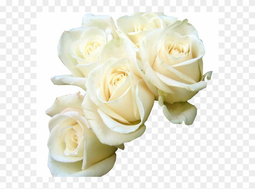 Rose white flower bouquet green wallpaper five white good morning rose white flower bouquet green wallpaper five white good morning white roses hd mightylinksfo
