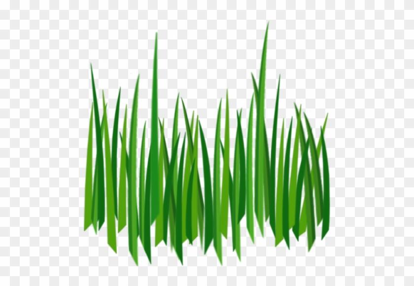 Photos Grass Clipart Images - Grass Texture Png #957901