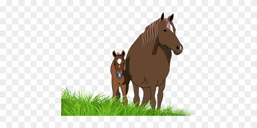 Foal Mare Horse Animal Foal Mare Horse Hor - Horse And Foal Clipart #961524