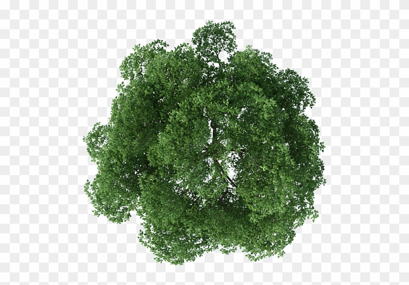 Cây Photoshop - Tree Top View Png - Free Transparent PNG ...