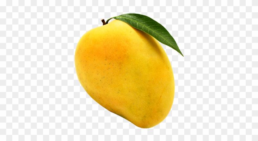 217 2176395 alphonso mango png