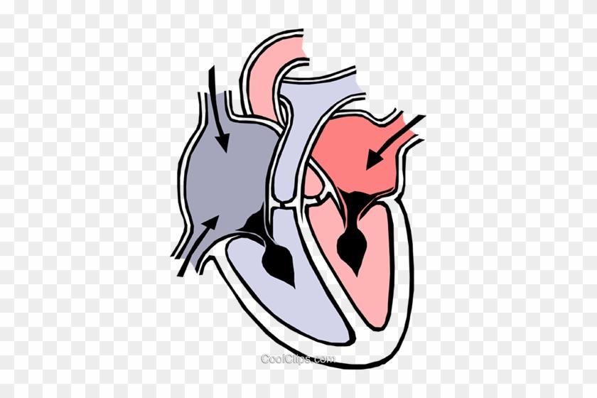 Heart Chambers Royalty Free Vector Clip Art Illustration - Heart Diagram #991728
