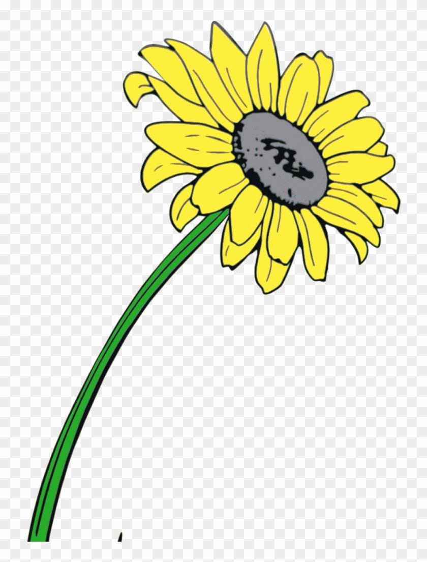 Schreibe Einen Kommentar Antworten Abbrechen - Sunflower #176222
