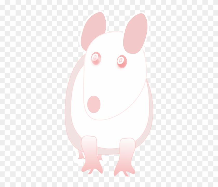 Mouse Albino, Lab, Laboratory, Rat, Science, White, - Laboratory Rat #176249