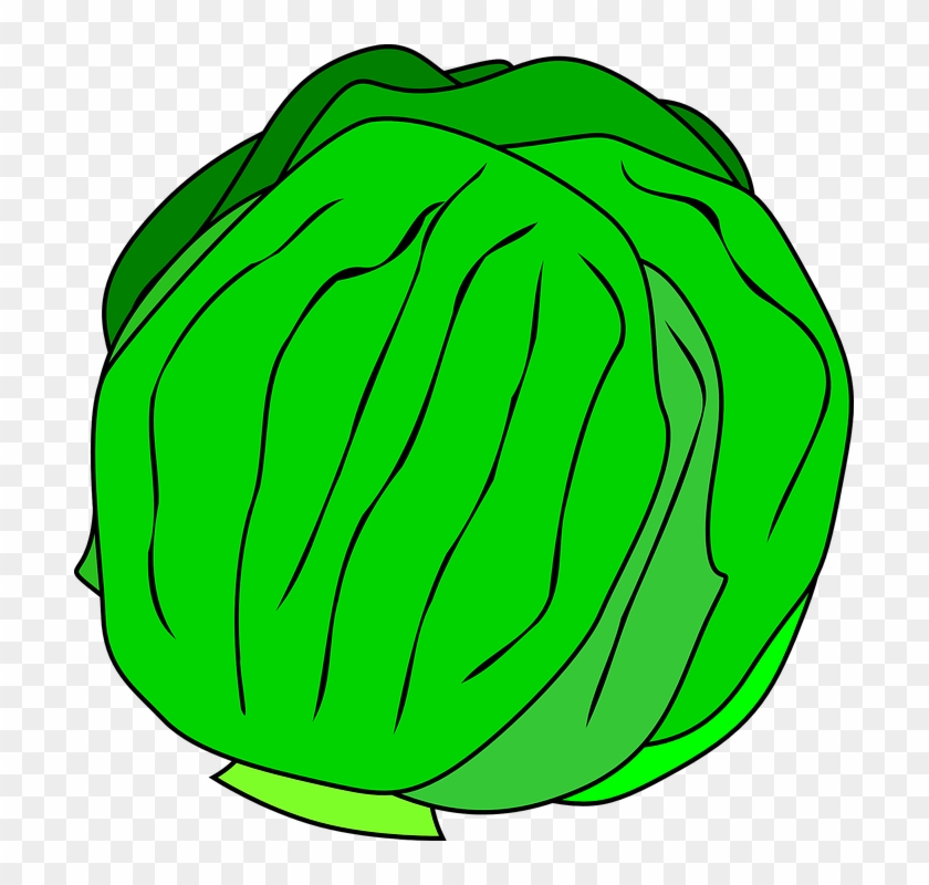 free vector whole lettuce clip art kinds of vegetables clipart rh clipartmax com vegetables clipart png vegetable clip art black and white