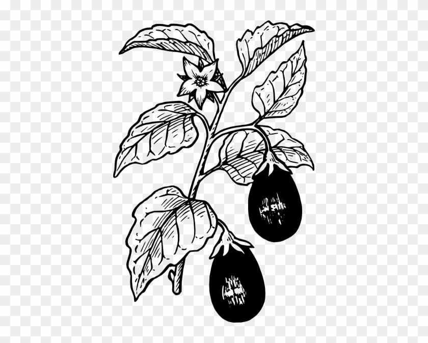 Free Vector Eggplant Clip Art - Eggplant Plant Black And White #177362
