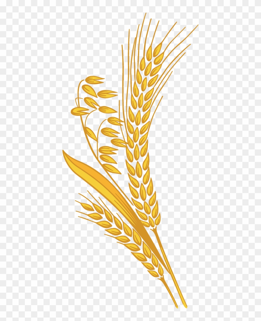12 Grain - Rice Grain Clipart Png - Free Transparent PNG ...