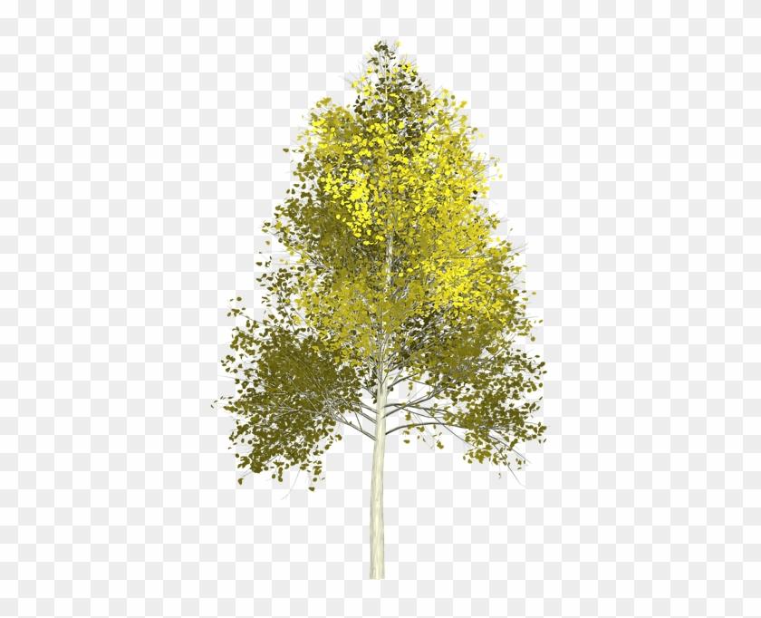 Tree Painting Cliparts 9, Buy Clip Art - Aspen Tree Png #1000467
