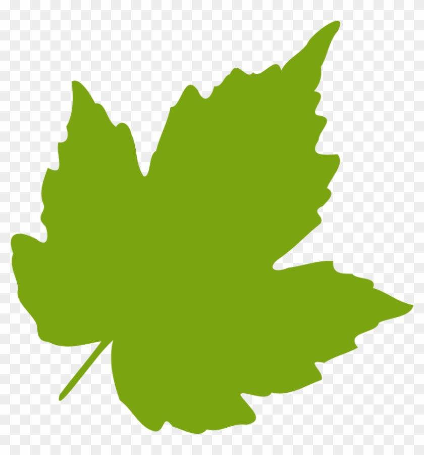 Oak Leaves Clip Art Birch Clipart Feuille Leaf 04 Vector Leaves Svg Free Transparent Png Clipart Images Download