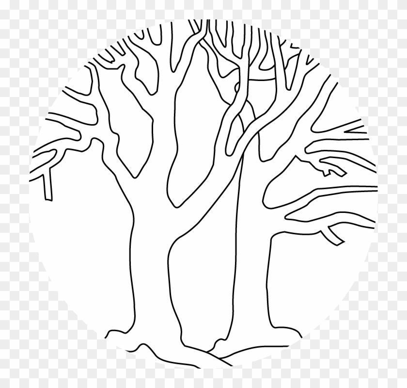 Bare Trees Outline - Coloring Book #1001094
