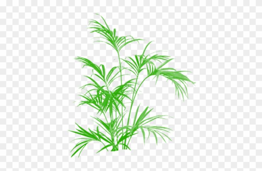 Tre, Cây Cối Và Cắt Dán Các Vector Png Miễn Phí Png - Artificial Silk Kentia Palm Tree Ifr - 210cm, Green #1001339