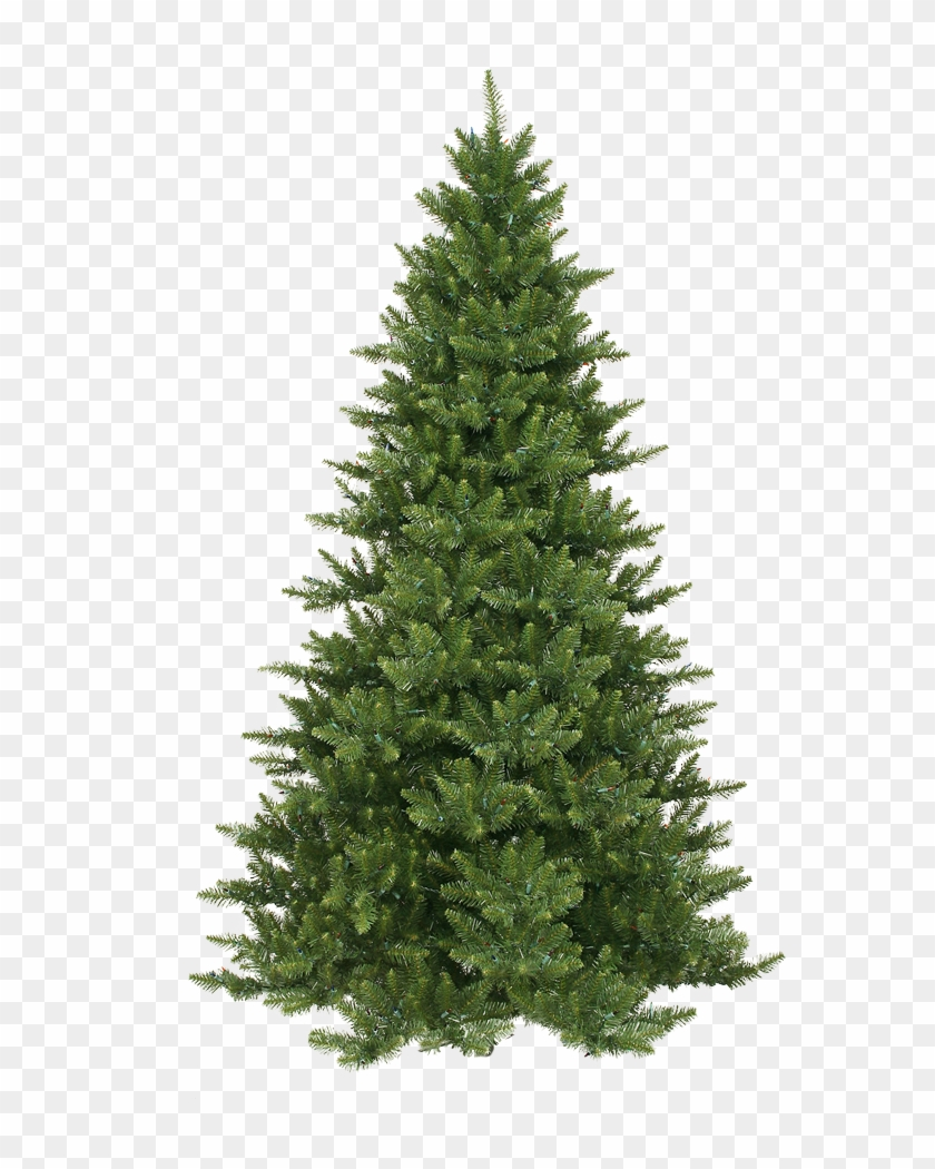 Xmas Pine Tree Png 10 By Iamszissz - Fraser Fir Artificial Christmas Tree #1003030