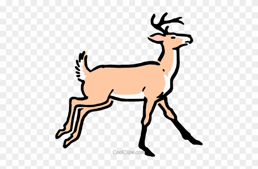Buck Clipart Caribou - Cartoon Deer #1004795