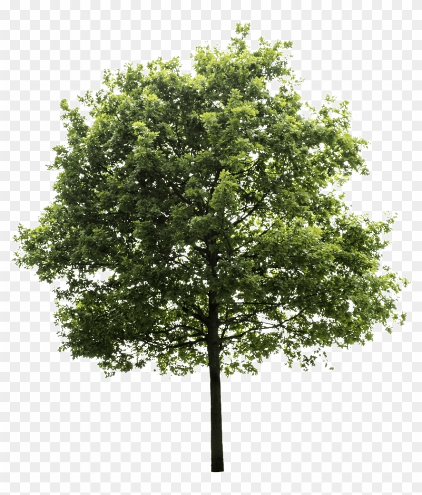 High Quality Png, Transparent Background - Transparent Background Tree Png #1010129