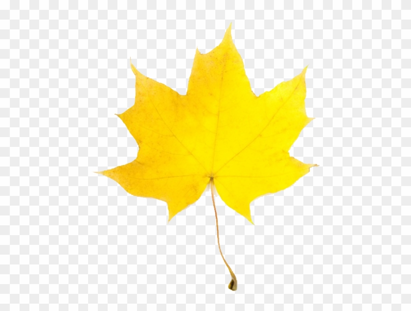 Yellow Leaves Clip Art - Yellow Fall Leaf Clip Art #1012048