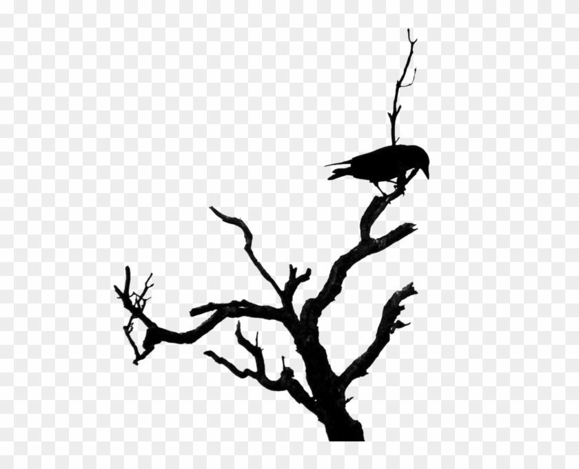 Share This Image - Bird On Dead Tree #1014050