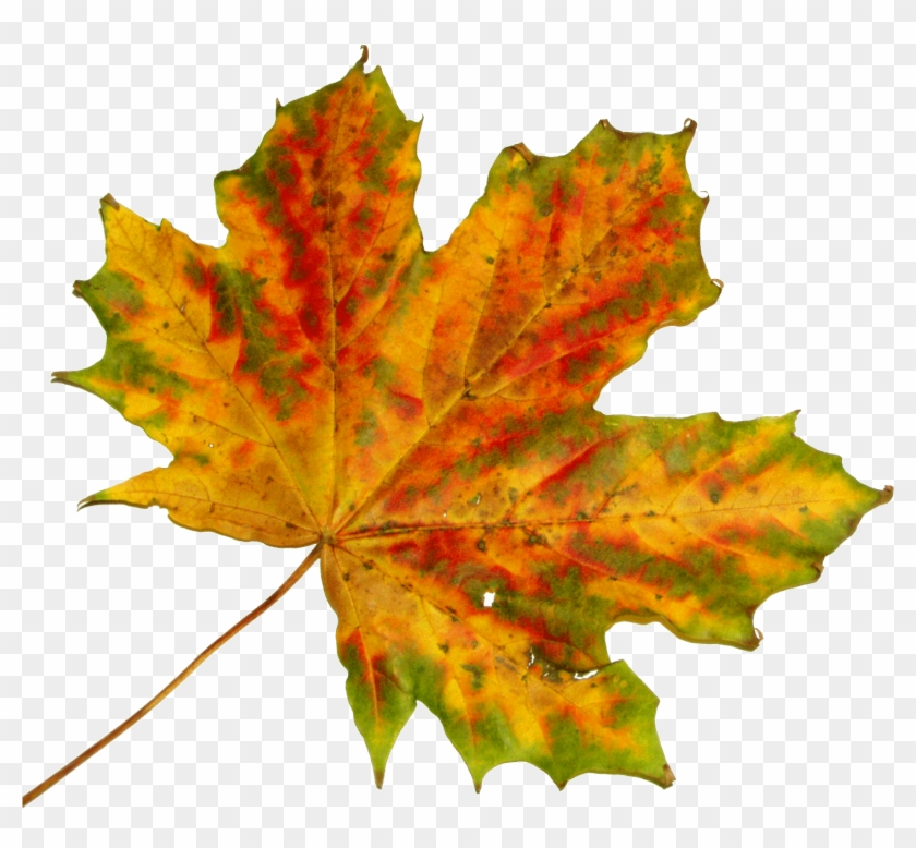 Free Vector Graphic - Fall Leaves To Cut Out #1014877