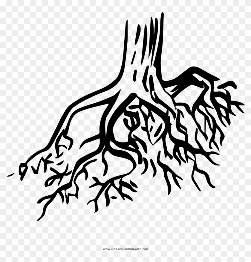Tree Roots Coloring Page Raices Para Colorear Free Transparent