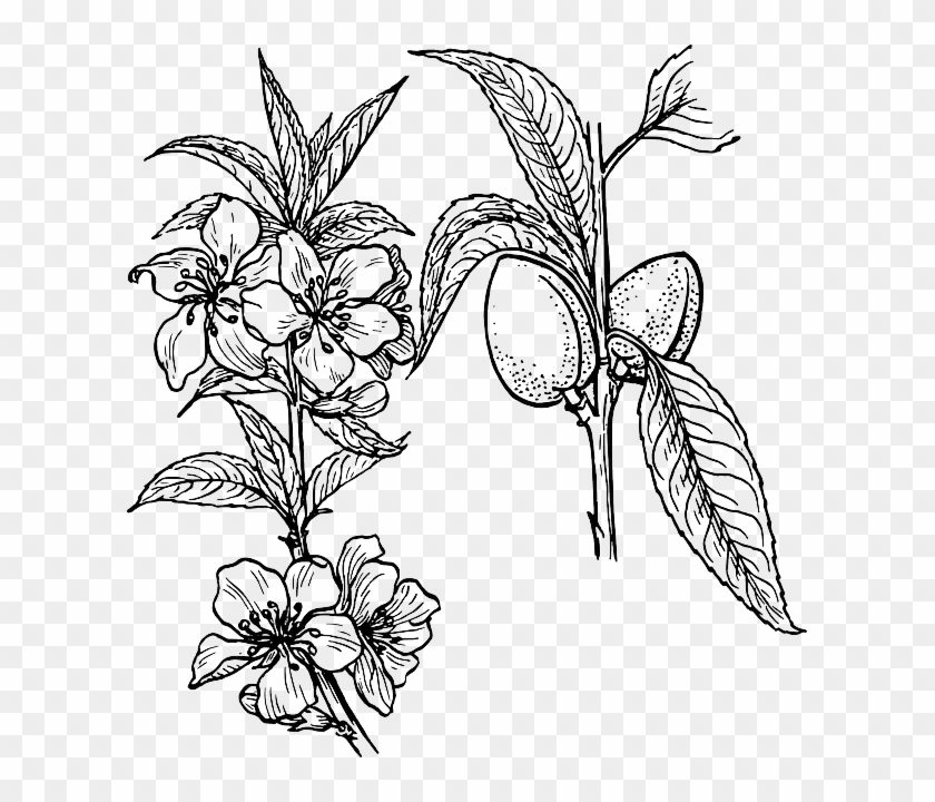 Outline drawing plants tree flower flowers free public plant outline drawing plants tree flower flowers free public plant drawing mightylinksfo