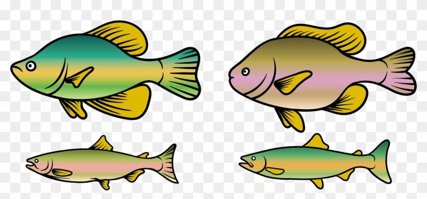 Rainbow Trout Fish Clip Art - Fish #1015883