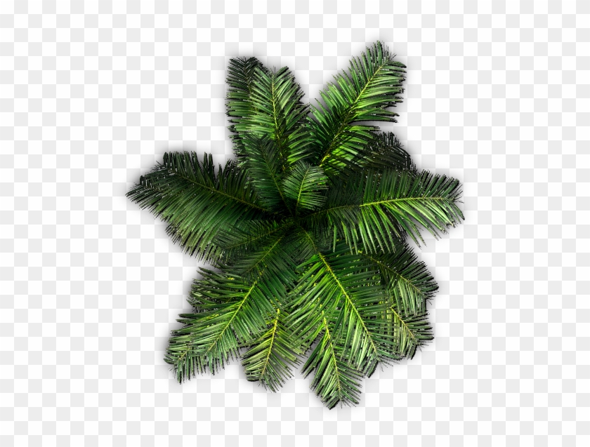 Palm Tree Top View Png With Plants Top View Png - Palm Tree Top View Png #1017211