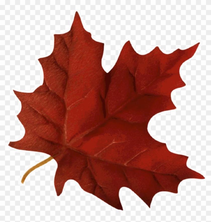 Autumn Leaves Religious Clipart - Fall Leaf Gif Transparent #1018215