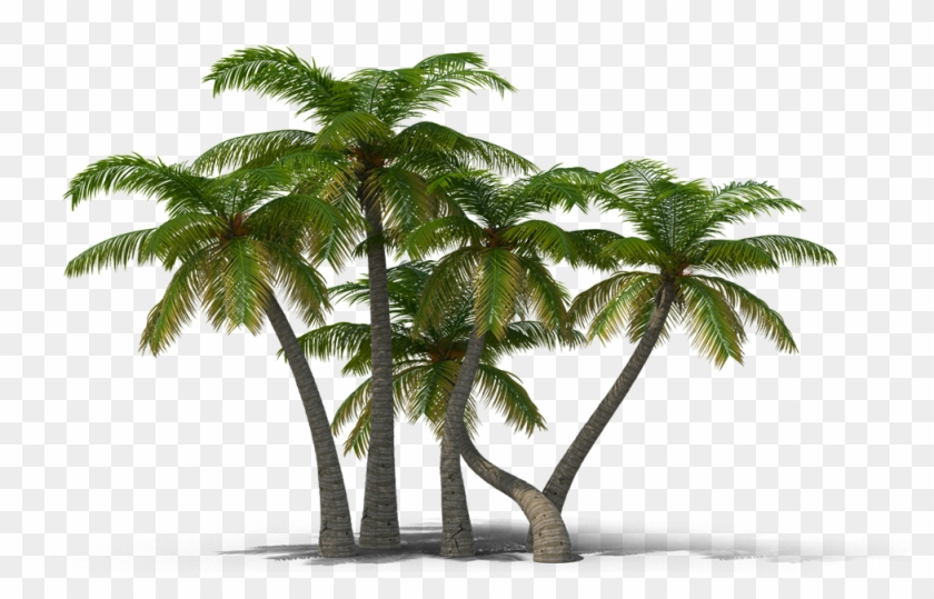 View In My Picture - Palm Trees Png #1019385