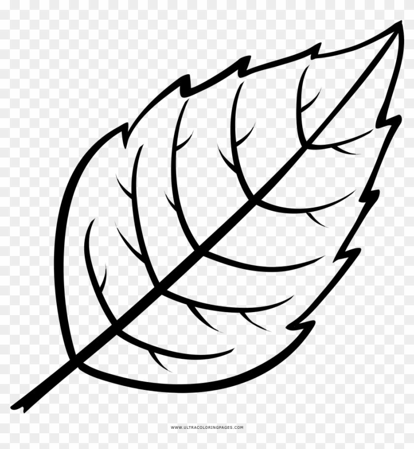 Leaf Coloring Page Folha Desenho Para Colorir Free Transparent