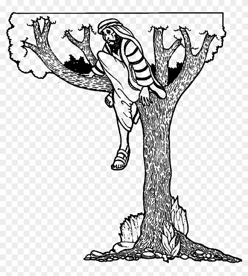 Fig Fruit Coloring Page Zacchaeus The Tax Collector Free Transparent Png Clipart Images Download