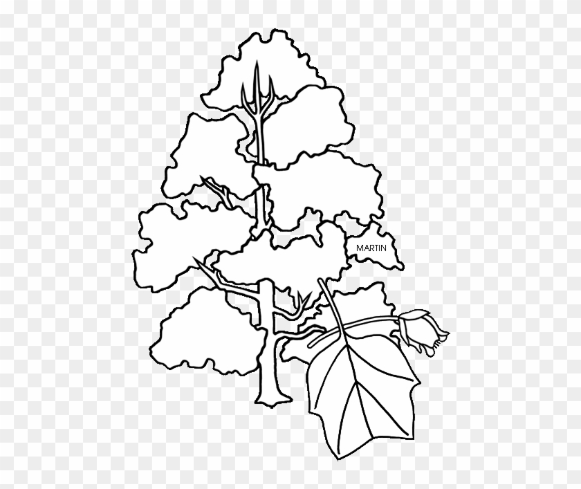 Ky Tulip Tree Clipart - Tennessee State Tree Coloring Page #1020564