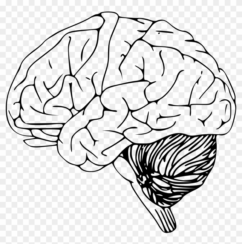 real brain transparent png brain outline free transparent png clipart images download real brain transparent png brain