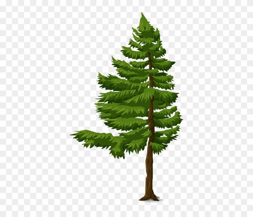 Gambar Animasi Pohon Cemara Free Transparent Png Clipart Images Download