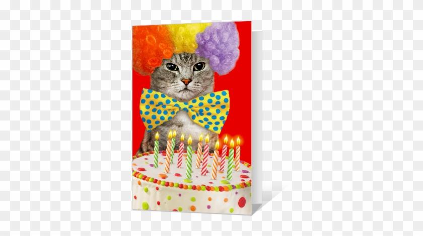 Birthday Catittude Greeting Card Birthday Card - Happy Birthday Wish With Cat #1022138